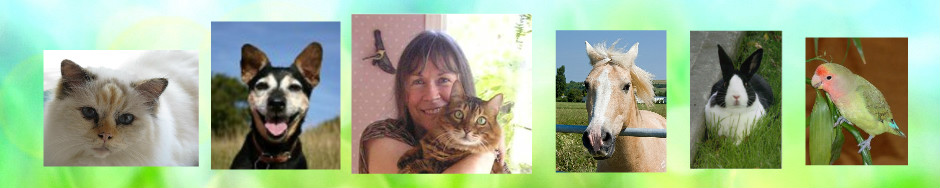 Sue Becker, Animal Communicator & Consultant
